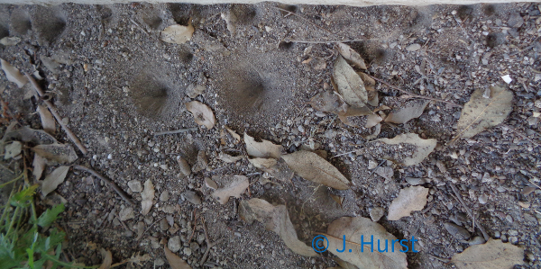 Trichter des Ameisenlöwen